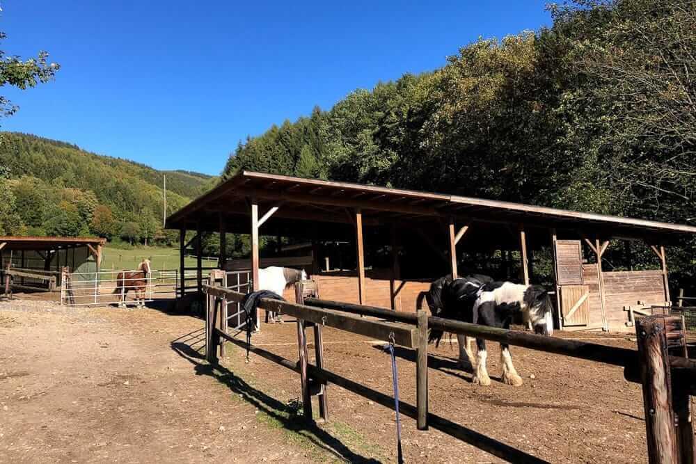 Blick auf einen Stall der Blitz und Donner Ranch im Sauerland wo Reiten ohne eigenes Pferd möglich ist