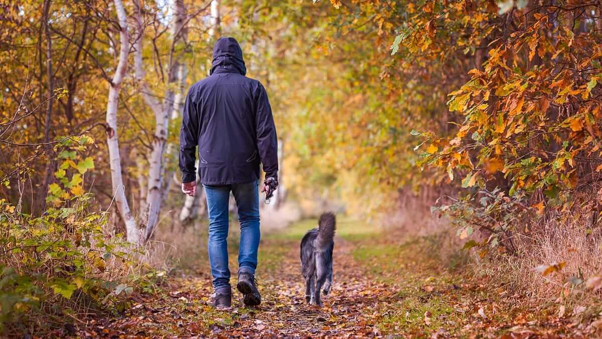 Spaziergang bei einem Urlaub mit Hund im Sauerland