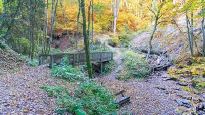 Eine Brücke im Wald auf dem Brücken- und Schluchtenpfad Winterberg