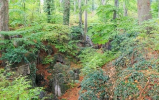 Blick in das Felsenmeer Hemer im Herbst