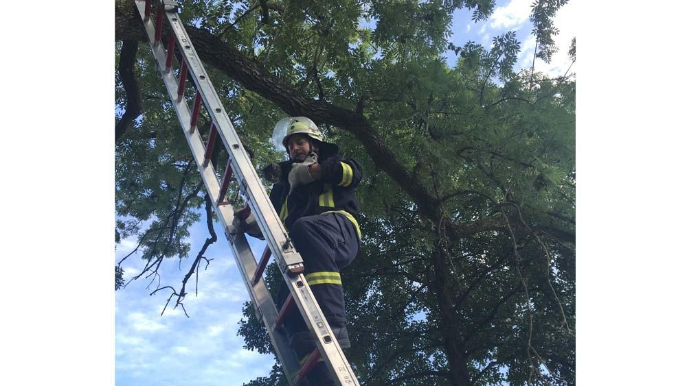 Rettung der Katze aus dem Baum.