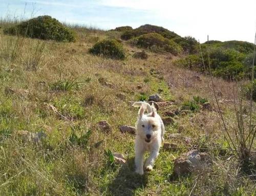 12 tolle Ausflugsziele im Sauerland mit Hund, die du kennen solltest