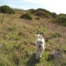 Tolle Ausflugsziele im Sauerland mit Hund