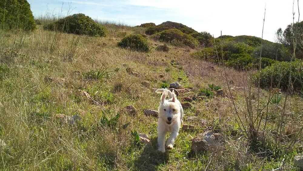 Ausflugsziele mit Hund im Sauerland bieten Natur, Kultur und Tiere
