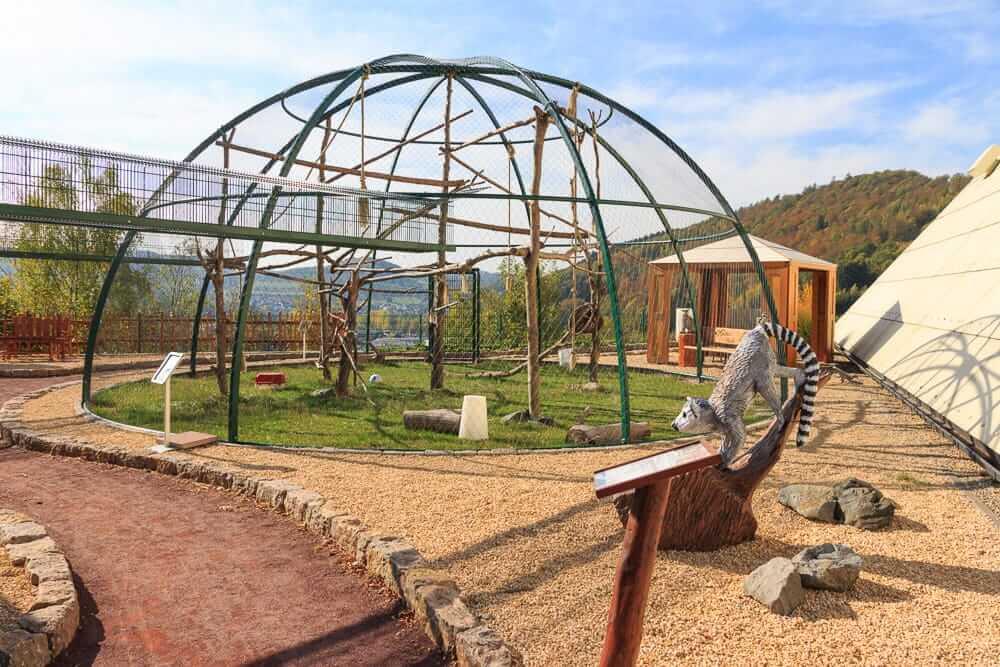 Blick auf das Katta Gehege im Galileo Park im Sauerland