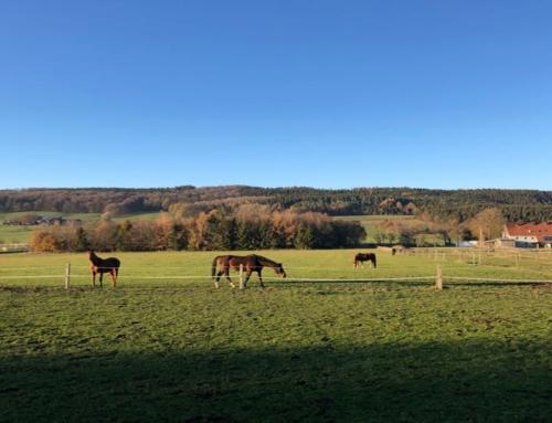 Die Rückkehr auf den Pferderücken – meine Erfahrungen