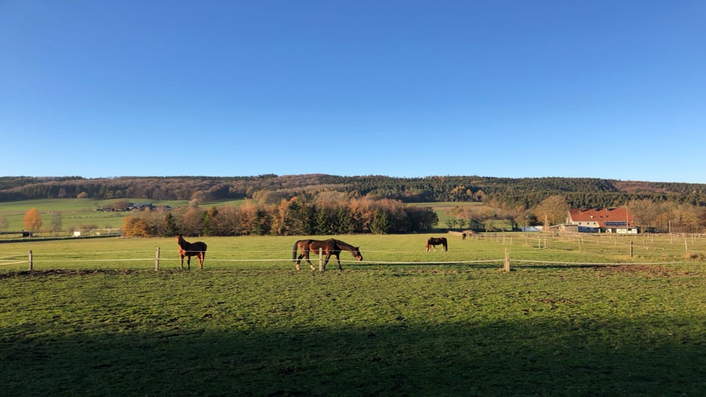 Pferde auf einer Wiese Reiten für Rückkehrer im Sauerland