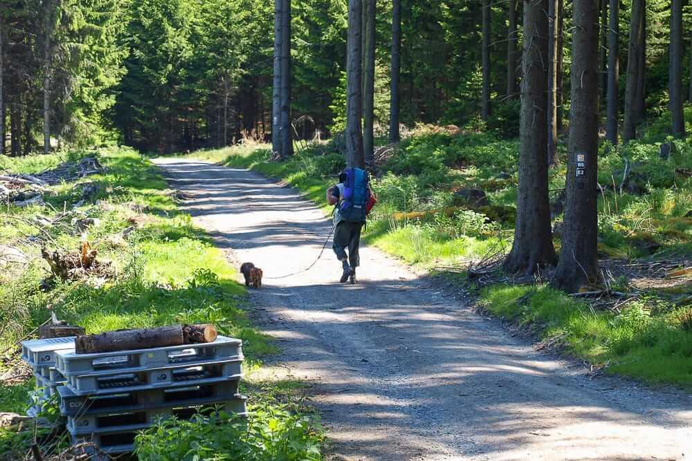 Wanderung durch den Wald auf einem der Fernwanderwege im Sauerland