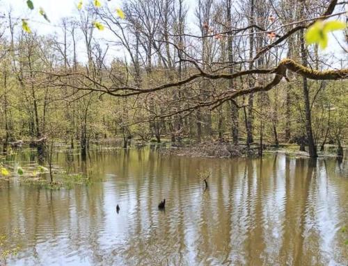 Infopfad Möhneaue: Naturerlebnisweg am Möhnesee
