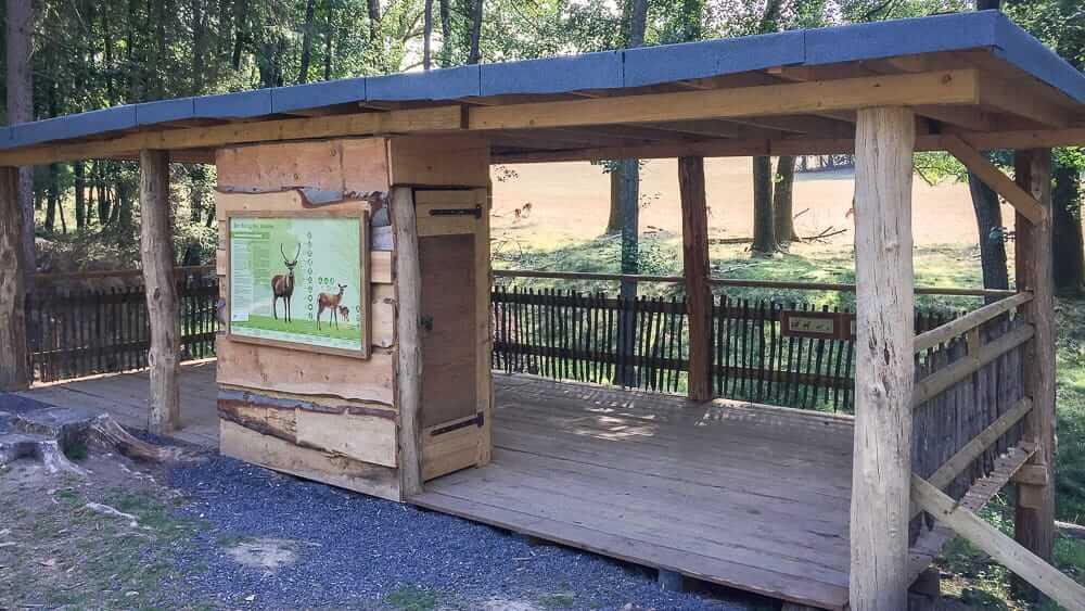 Wildwald Vosswinkel ein Ausflugsziel im Sauerland für den Sommer