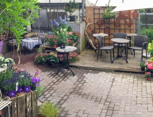 Café Löwenzahn: Frühstück oder Kuchen im Blumenmeer