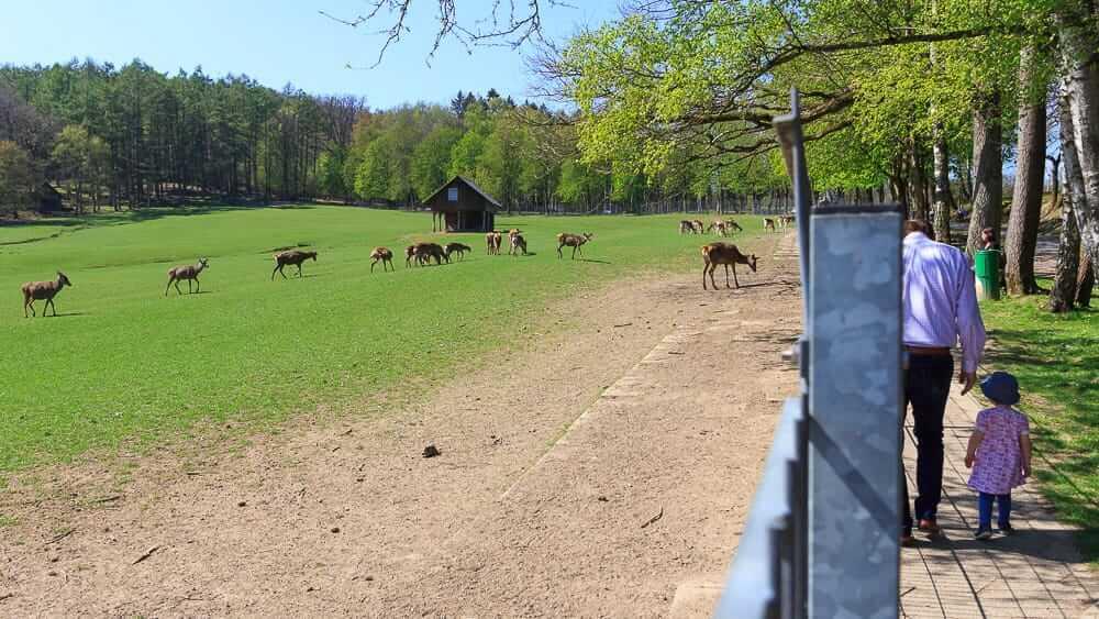 Spaziergang mit Kind am Völlinghausener Wildpark