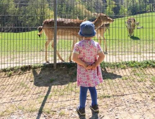 Wildpark Völlinghausen: Tierischer Ausflug zum Möhnesee
