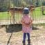 Mädchen beobachtet Rehe im Wildpark Völlinghausen am Möhnesee im Sauerland