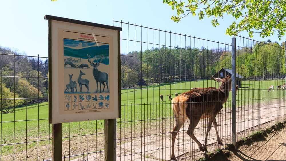 Rothirsche im Im Wildpark Völlinghausen am Möhnesee