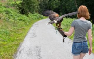 Spaziergang mit einem Greifvogel in einer Mendener Falknerei im Sauerland
