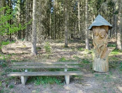 Westenfelder Walderlebnispfad im Sauerland: Wald interaktiv erleben