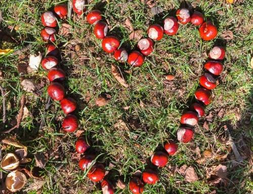 8 Ausflugsziele im Sauerland für den Herbst
