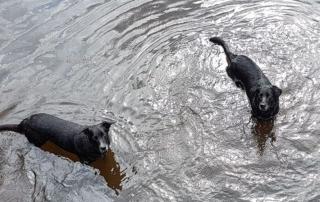 Urlaub mit Hund im Sauerland Pinterest
