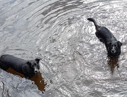 7 Gründe für Urlaub mit Hund im Sauerland