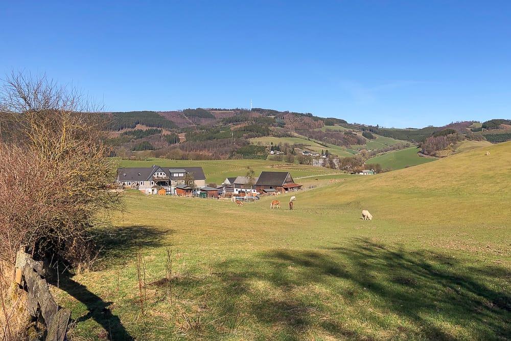 Pferde beim Spaziergang in Wenholthausen
