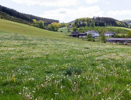 Spaziergang in Wenholthausen: Abwechslungsreiche Runde durch das Erholungsgebiet Wennetal